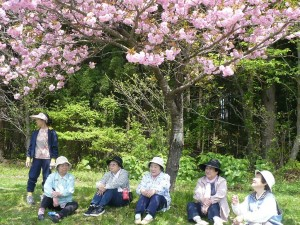 ウオーキングの終点、清水岱公園では満開の桜にうっとり。